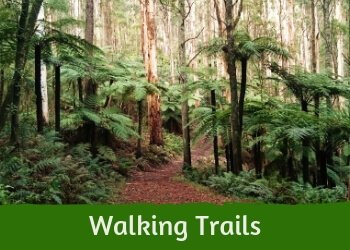 Best Bushwalks near Melbourne - the Dandenong Ranges, Australia