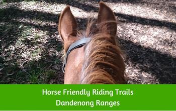 Horse riding in the Dandenong Ranges