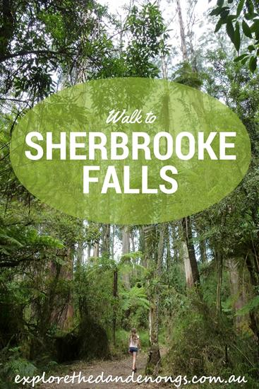 Sherbrooke Falls in the Dandenong Ranges near Melbourne. A beautiful walk through cool temperate rainforest with huge old-growth trees, Lyrebirds and colorful native birds