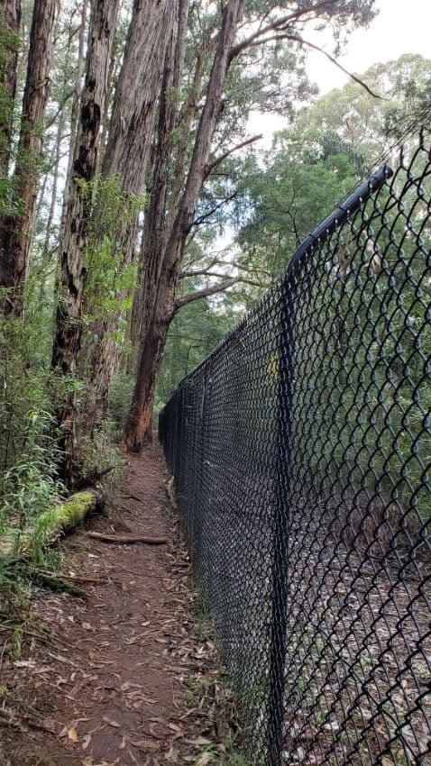 Grey Gum Track, Mt Evelyn Walk