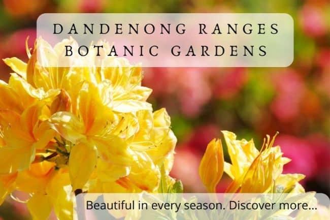 National Rhododendron Gardens, (Dandenong Ranges Botanic Gardens) Olinda - Gardens near Melbourne