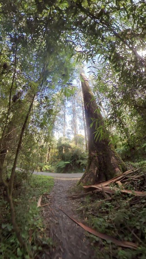 Olinda Falls Walking Track in the Dandenong Ranges National Park near Melbourne.