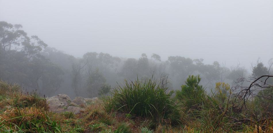 A misty view from Burkes Lookout