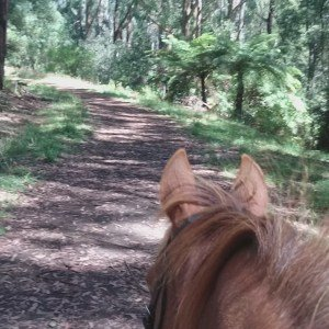 Horse Riding Trail in the Dandenong Ranges